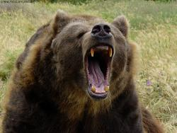 The Bear's Photo